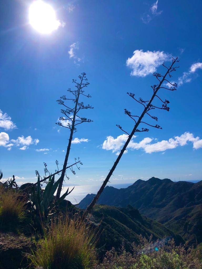 Landschaft Teneriffa bei strahlender Sonne