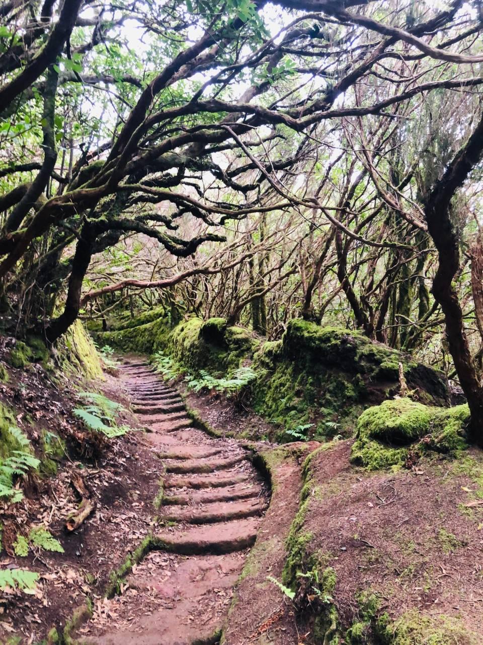 Waldweg mit Moos, Anaga Gebirge